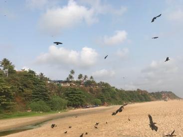India birds of prey